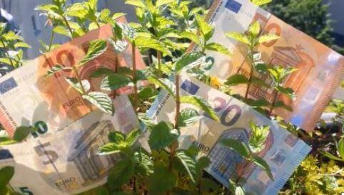 EU-Taxonomie: Schritte in Richtung Green Deal